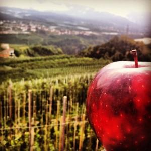 La mela regina di Pomaria a Casez in Val di Non